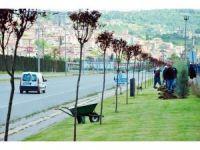 Kdz. Ereğli'de yeşil alanlar ağaçlandırılıyor