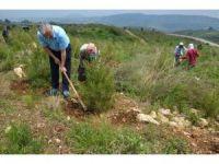Mersin'de179 hektar alanda dikili 306 bin kızılçam fidanına bakım yapılıyor