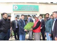 Bulanıklı çiftçilere sebze fidesi dağıtımı