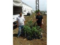 Adana Organize Sanayi Bölgesi sanayicilere 6 bin fidan dağıttı