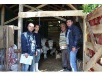 Süt sığırcılığı 19 aileye iş kapısı oldu