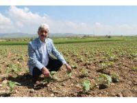 Yenişehir'de 400 bin dekar alan suya kavuşuyor
