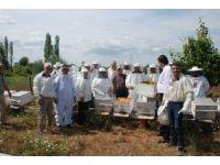 Bayramiç'te ana arı üretim kursu açıldı