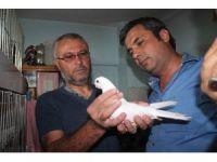 Denizli'de güvercin güzellik yarışmasın yoğun ilgi