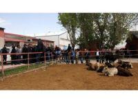 Erzurum'daki canlı hayvan pazarı kapatıldı