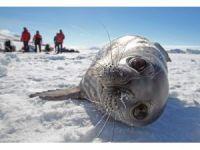 Okyanuslardaki kirlilikten Antarktika kıyıları da nasibini aldı