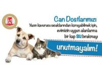 Bilecik Belediyesinden sokak hayvanları için önemli çağrı