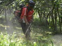 Fındıkta bakım ve temizlik önemli