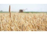 Gıda üretiminin sürdürülebilirliği için köyden kente göç önlenmeli