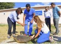 2 deniz kaplumbağası denize geri döndü