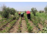 Hobi bahçeleri ve kurslarla ruhsal sorunlarını aşıyorlar