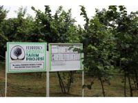 Ferrero Fındık yetkilileri üretici ile bir araya gelerek bahçe günleri yapıyor