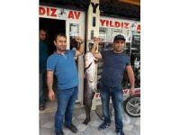 44 kiloluk yayın balığı yakaladılar