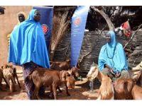 TİKA'dan Nijer'de kadınlara küçükbaş hayvan desteği