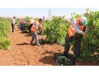 Büyükşehir'den dar gelirli ailelere taze meyve ikramı