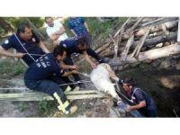 Su kuyusunda koyun ve kaplumbağa operasyonu