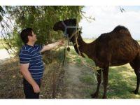 İran değil Aydın, meradaki develer Aydın'da bahar havasının keyfini çıkarıyor