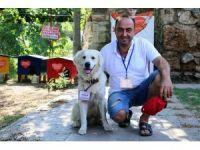Turizm elçisi kedilerin koruması fenomen köpek 'Aras'