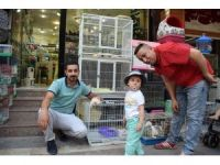 Malatya'da İskoç kedisi merakı