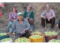Üreticiler armutlarını satmak için destek istiyor