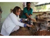 Gaziantep Hayvanat Bahçesi, doğurganlık oranıyla Avrupa'da birincisi