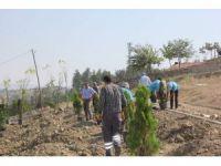 Sungurlu belediyesi 920 fidanı toprakla buluşturdu