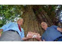 Dünyanın en yaşlı 5 ağacından birine pastalı kutlama