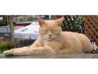 Alaska'nın kedi belediye başkanı Stubbs hayatını kaybetti