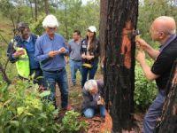 TİKA'dan orman zararlılarına karşı mücadelede Orta Amerika ülkeleri ile tecrübe paylaşımı