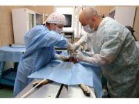 Köpekleri kısırlaştırmada yeni yöntem: Laparoskopi