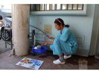 Sokak hayvanları için takılan sulukların kırılmasına tepki