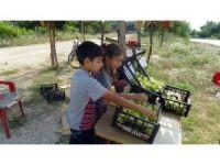Okul harçlıklarını yol kenarında incir kiraz satarak çıkarıyorlar
