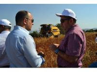 Bilecik'te karabuğdayın hasadı yapılmaya başlandı