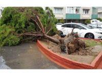 Fırtına nedeniyle ağaçlar araçların üzerine devrildi