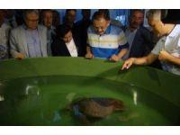 Bakan Özhaseki yavru carettaları denizle buluşturdu