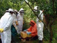 Muğla orman köylüsüne 14 yılda 22,5 milyon destek