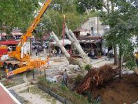 Çengelköy'de fırtınada devrilen asırlık çınar tekrar yerine dikildi