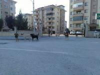 Bursa'da köpek istilası