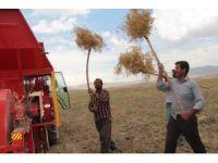İpekyolu Belediyesinden çiftçilere alternatif ürün