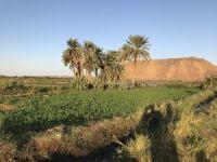 Sudan'da e-tarıma geçilecek