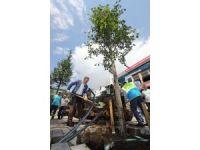 Gaziosmanpaşa'da ağaçlandırma çalışmaları devam ediyor