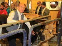 Kadir Topbaş, İBB Alibeyköy Kurban Satış ve Kesim Merkezi'nde inceleme yaptı