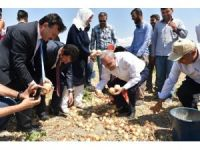 Bakan Fakıbaba, tarım işçileriyle birlikte soğan topladı
