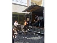İstanbul'da kaçan boğa dehşet saçtı: 3 yaralı