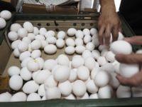 Yumurta krizi Tayvan'a sıçradı
