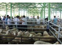 Uşak'ta kurban satış ve kesim yerleri açıklandı