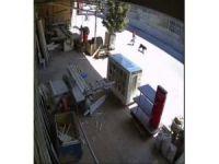 Çocukların köpek hırsızlığı güvenlik kamerasında
