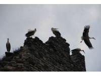 Leyleklerin kartpostallık göçü