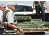 Suriye'ye götürülürken yakalanan saka kuşları doğaya bırakıldı