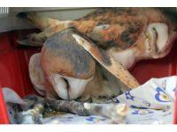 Tedavisi tamamlanan 4 yabani hayvan doğaya salındı